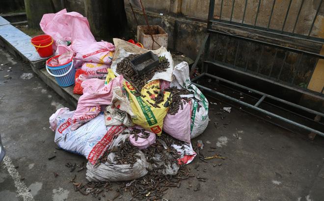 nổ kinh hoàng ở Bắc Ninh, đạn bay khắp nơi, thu gom hơn 500kg vỏ đạn