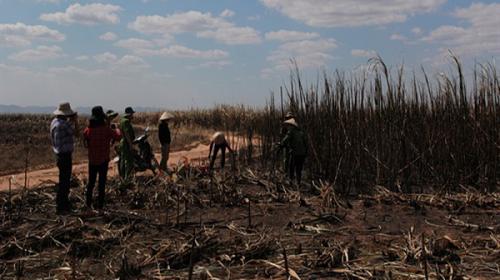 Mía cháy hàng loạt ở Đăk Lăk, người dân khóc ròng lo mất trắng