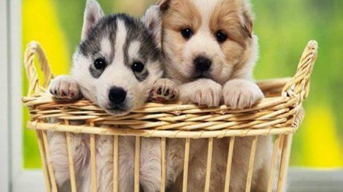 Chiêm bao mơ thấy chó có ý nghĩa gì và con số?