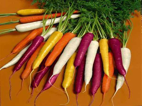 Giải mã thấy nằm mơ thấy củ cà rốt