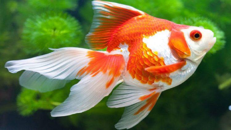 Nằm mơ thấy cá là điềm báo trước gì