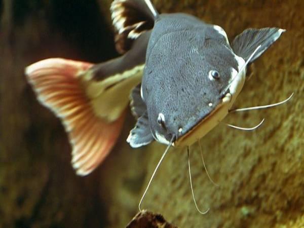 Mơ thấy cá trê điềm báo lành hay dữ?