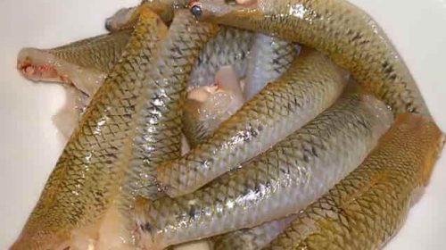 Mơ thấy cá bống đánh số gì, điềm báo gì?